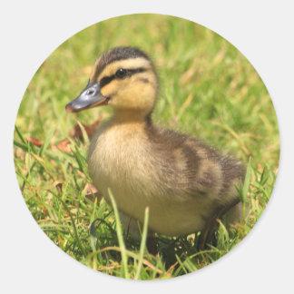 Duckling Classic Round Sticker