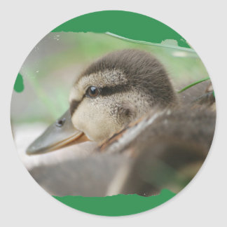 DUCKLING COLLECTION - by Jean Louis Glineur Classic Round Sticker