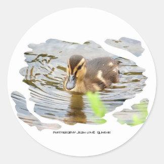 DUCKLING DUCK CHICKEN photo Jean Louis Glineur Classic Round Sticker