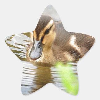 DUCKLING DUCK CHICKEN photo Jean Louis Glineur Star Sticker