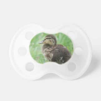 Duckling ~ duck chickens/photo Jean Louis Glineur Pacifier