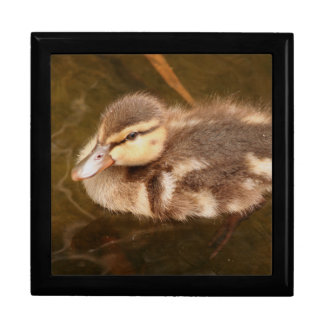 Duckling Gift Box