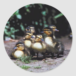 Duckling Group Classic Round Sticker