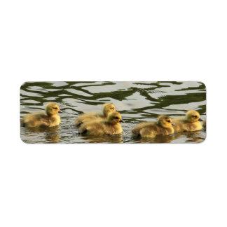 duckling line