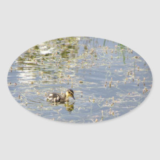 Duckling Reflections Oval Sticker