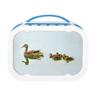 Ducks And Ducklings Lunch Box