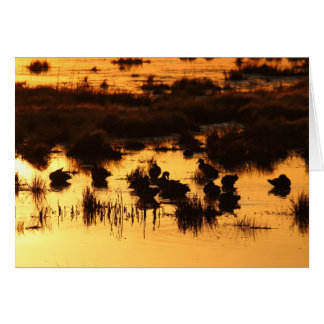 Ducks at Daybreak Card