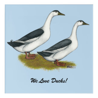 Ducks:  Blue Magpies Acrylic Wall Art
