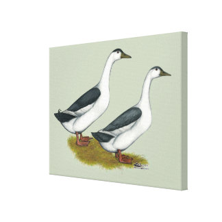 Ducks:  Blue Magpies Canvas Print