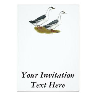 Ducks:  Blue Magpies Card