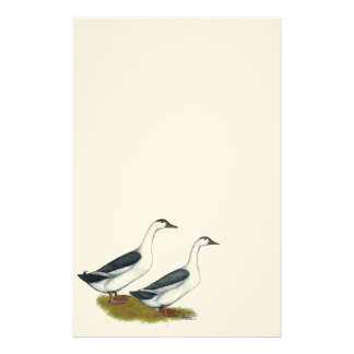 Ducks:  Blue Magpies Stationery
