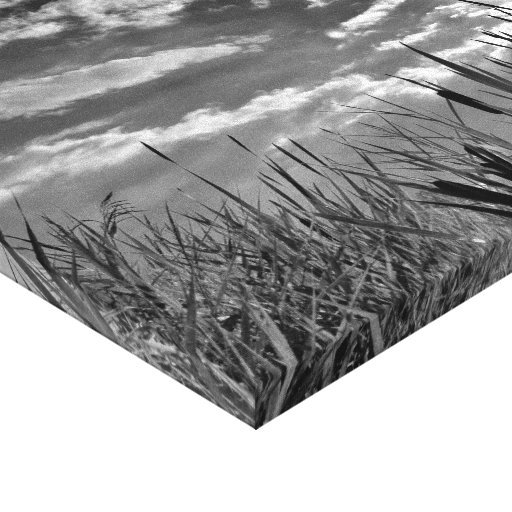 Duck's Eye View Stretched Canvas Prints