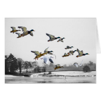 Ducks flying card