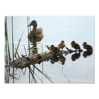 Ducks in a Row Photo Print