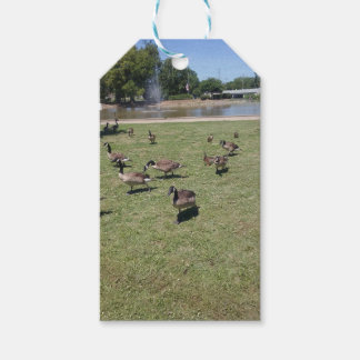 Ducks In Nature Gift Tag Pack Of Gift Tags