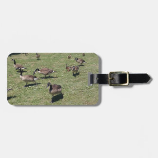 Ducks In Nature Luggage Tag