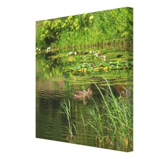 Ducks in Sweden Pond on Canvas