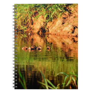 DUCKS IN WATER QUEENSLAND AUSTRALIA NOTEBOOKS