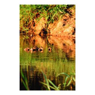 DUCKS IN WATER QUEENSLAND AUSTRALIA STATIONERY