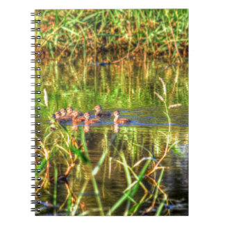 DUCKS IN WTAER AUSTRALIA ART EFFECTS NOTEBOOKS