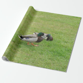 Ducks on a grass wrapping paper