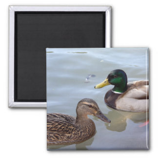Ducks on a Pond Magnet