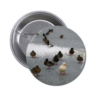 Ducks on Ice 2 Inch Round Button