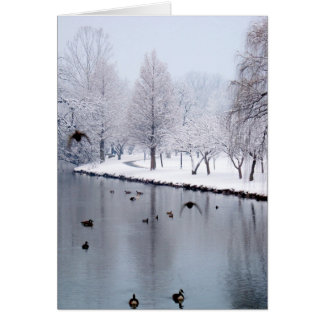 Ducks on the Creek Card