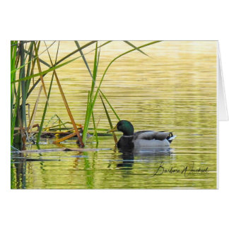 Ducks on the lake card