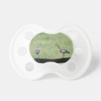 DUCKS QUEENSLAND AUSTRALIA PACIFIER