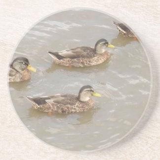 Ducks swimming beverage coaster