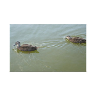 Ducks swimming canvas print