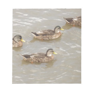 Ducks swimming notepads