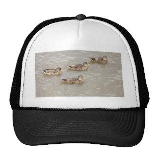 Ducks swimming trucker hat