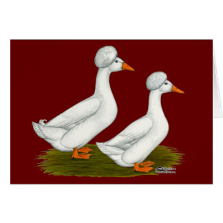 Ducks:  White Crested Card