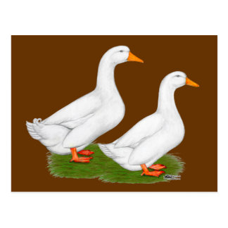 Ducks:  White Pekins Postcard