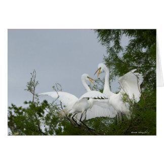 Dueling Egrets Card