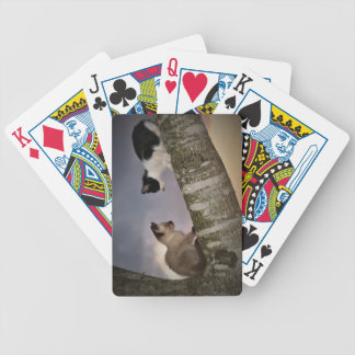 Dueling Kittens Bicycle Playing Cards