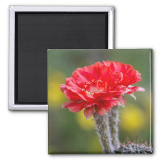 Duet of firelight square magnet
