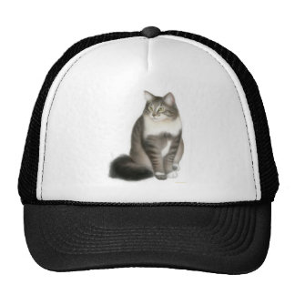 Duffy the Maine Coon Cat on a Hat