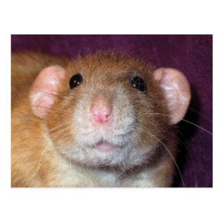 Dumbo Rat Post Card