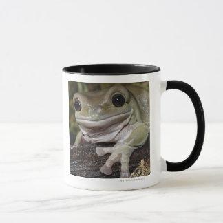 Dumpy Tree Frog. Smiling Frog. Litoria caerulea. Mug