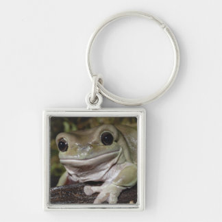 Dumpy Tree Frog. Smiling Frog. Litoria caerulea. Silver-Colored Square Keychain