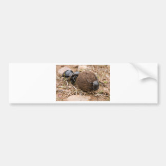 Dung Beetle Bumper Sticker