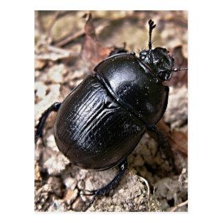 Dung Beetles Postcard