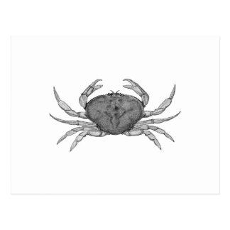 Dungeness Crab Logo (line art) Postcard