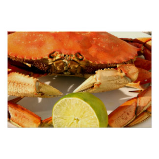 Dungeness Crab Poster