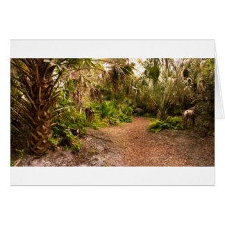 Dusk in Florida Hardwood Hammock Card