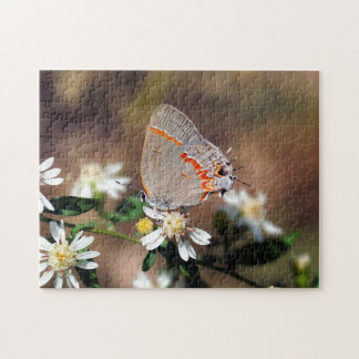 Dusky Blue Hairstreak Butterfly on Flower Puzzle