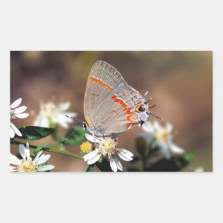 Dusky Blue Hairstreak Butterfly Rectangle Sticker